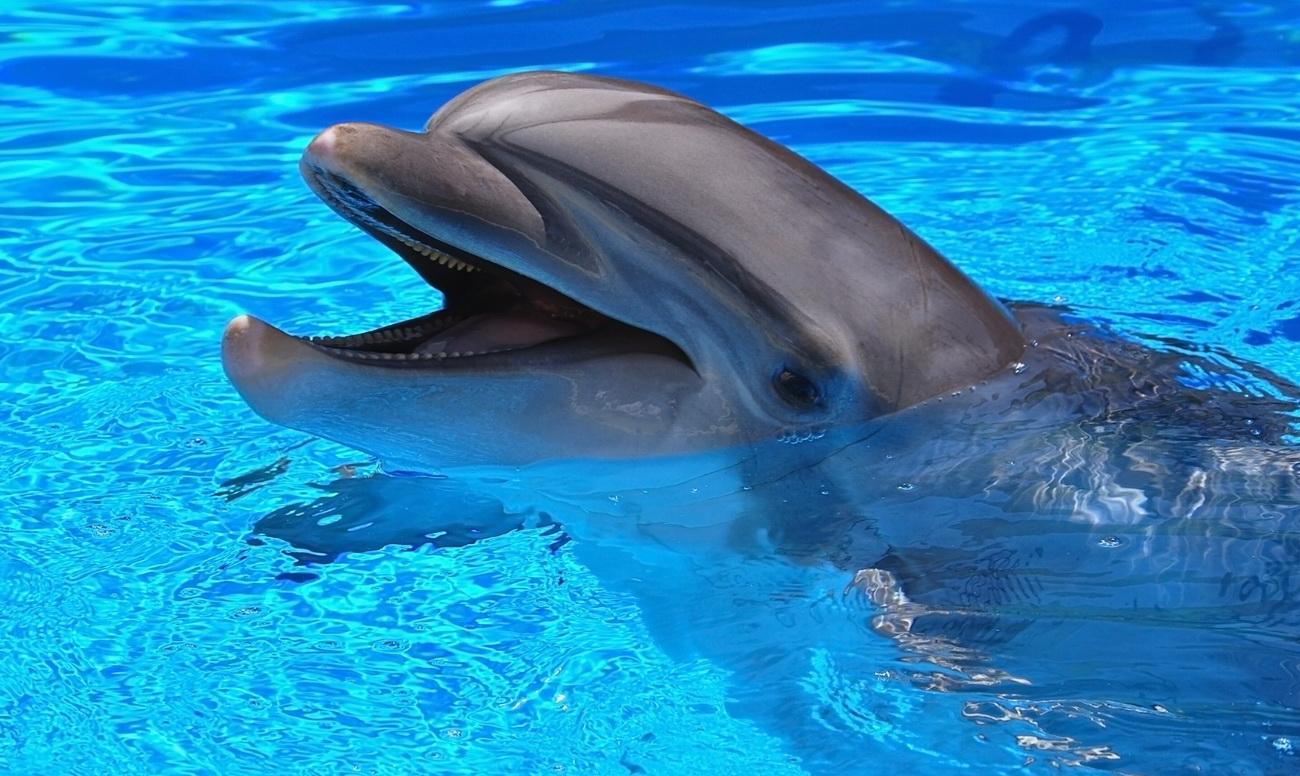дельфин 2b3