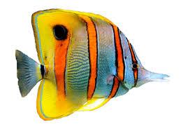 рыбы энциклопедия дайвинга