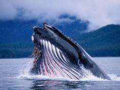 кит рыба