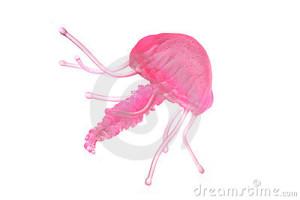 медуза энциклопедия дайвинга