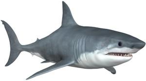 Акула энциклопедия дайвинга